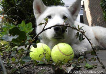 Goed doel voor oude tennisballen….